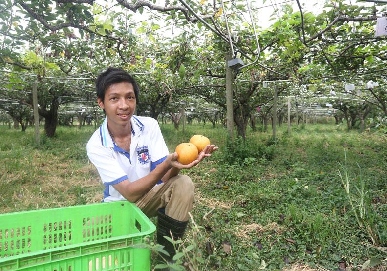 推果樹認養 打響三灣梨品牌