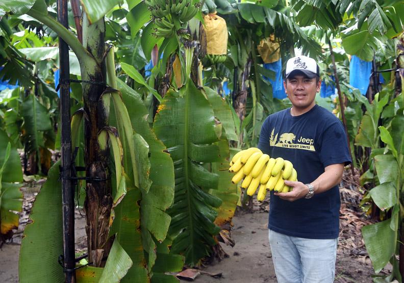 改良香蕉 變身保健食品、零嘴