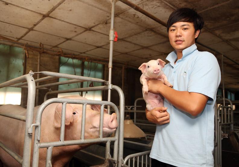 不餵廚餘、重清潔 養出幸福的豬