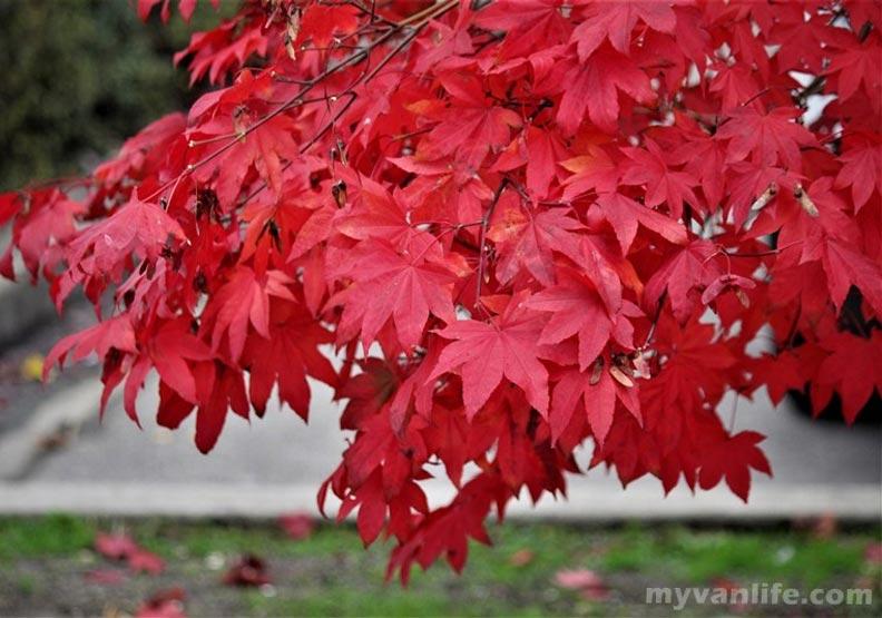 在布洛內灣北岸,那一場與秋色的豔遇