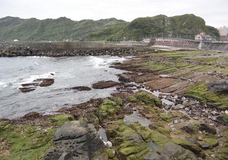 海苔產品口味變多 竟是海漂垃圾逼的!