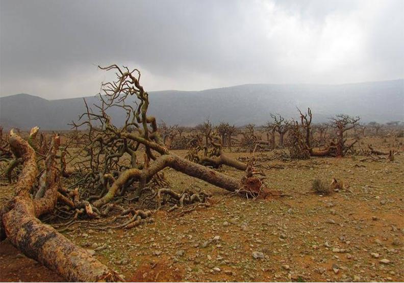 幾乎翻倍 暖化威脅世界自然遺產 三年增至62個