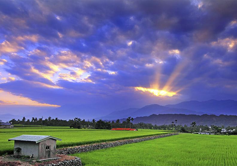 花蓮鼓勵農民投入精緻農業 有機農作面積全台居冠