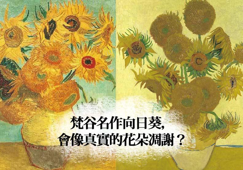 梵谷名作向日葵會像真花一樣凋謝!原因是…