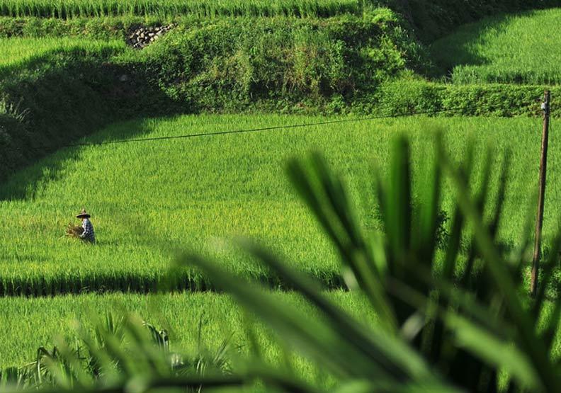 這些臺灣精品米 你吃過幾種?