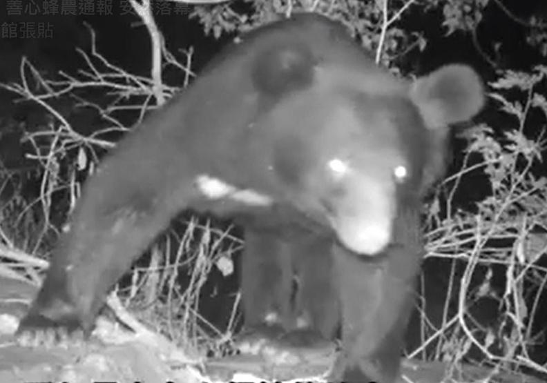 黑熊媽媽:人的包容可以決定熊的命運
