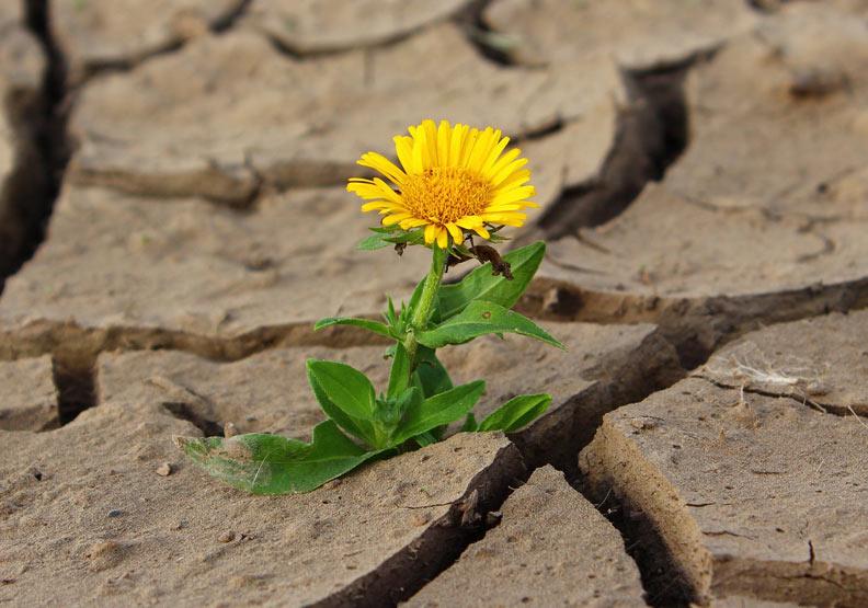 面對逆境也不怕 老師教會的「想像幸福」