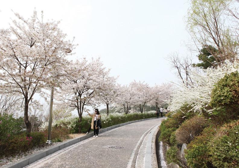 首爾駱山公園 遠離喧囂的櫻花世界