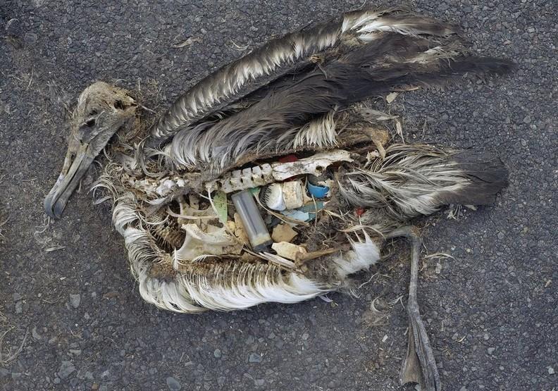 心碎的衝擊:看塑膠對動物傷害多麼巨大
