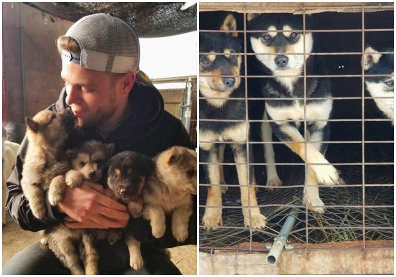 冬奧選手不僅專業,他還解救了韓國狗肉繁殖場的90隻狗狗!