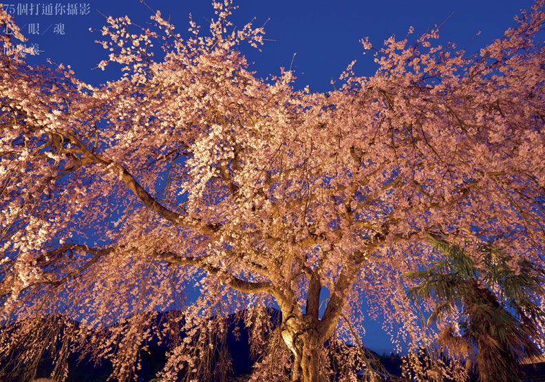 櫻花季來了!攝影重點一把抓