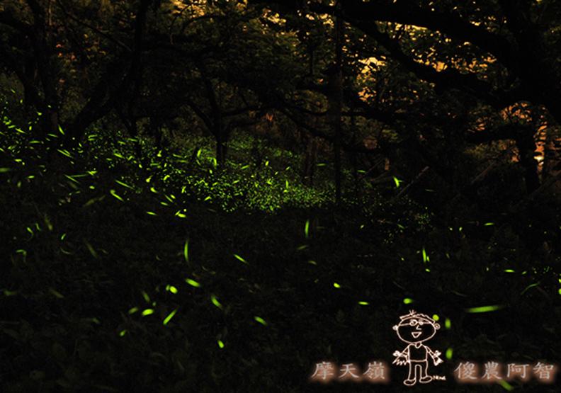 螢光滿溢,您對傻農的支持讓螢火蟲有了家
