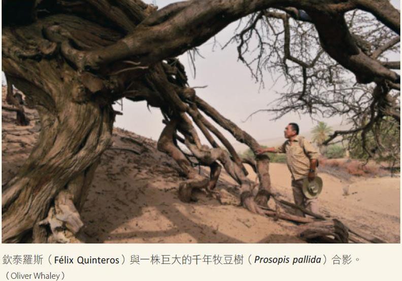 愛樹的傻瓜:是我們讓世界變得艱困