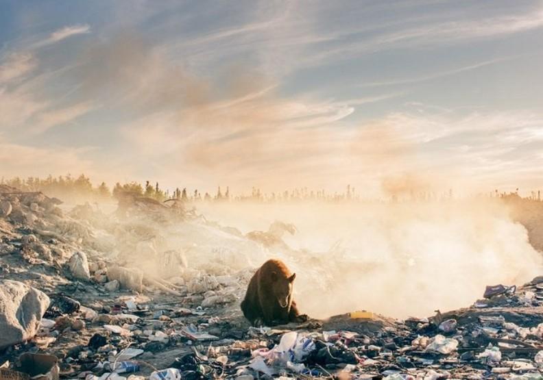 科學家警告:人類僅佔地球總生命的0.01%,卻已摧毀其他83%的物種