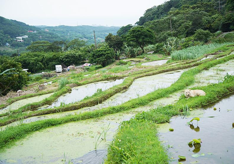 振興八連溪里山文化  人與自然和諧共存