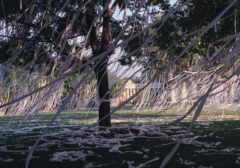 樹木沉痛的怒吼!衛生紙浪費濫用的悲歌