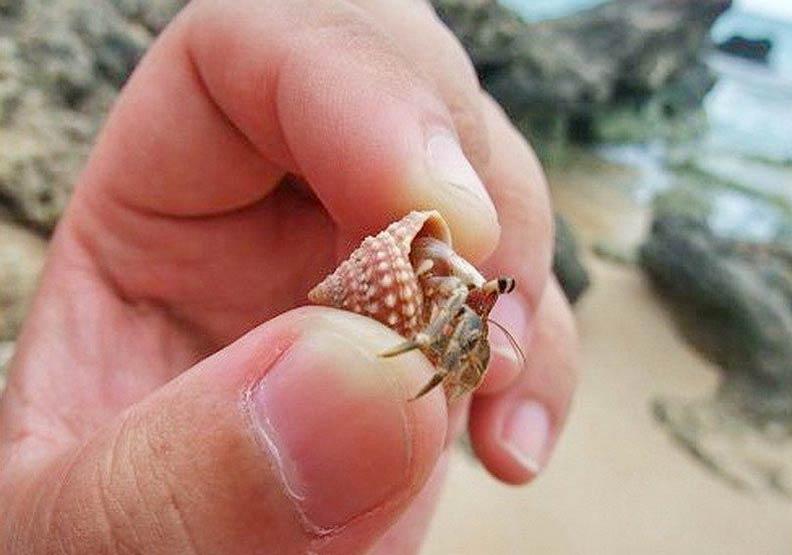 盜抓300隻寄居蟹罰3000元 保育人士怒:是在搔癢嗎?