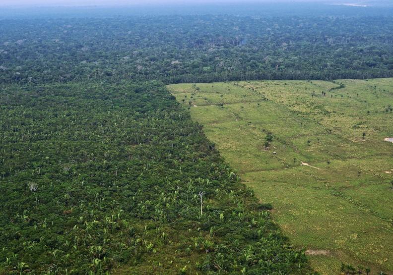 心碎的衝擊!熱帶雨林正遭遇破記錄的盜伐損失