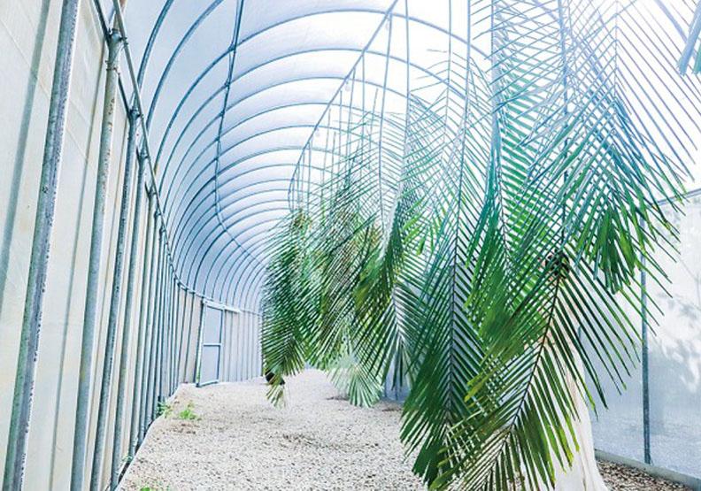 集合跨界創意!森林大學300公尺「毛毛蟲」長廊