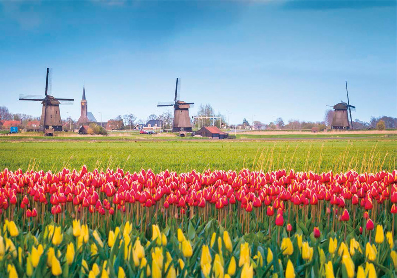荷蘭農業有多強?