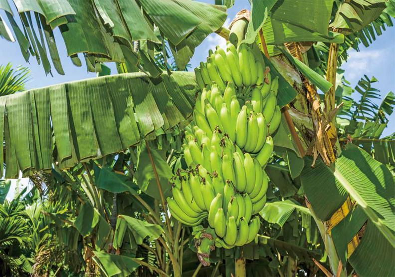 水果產銷的失衡線