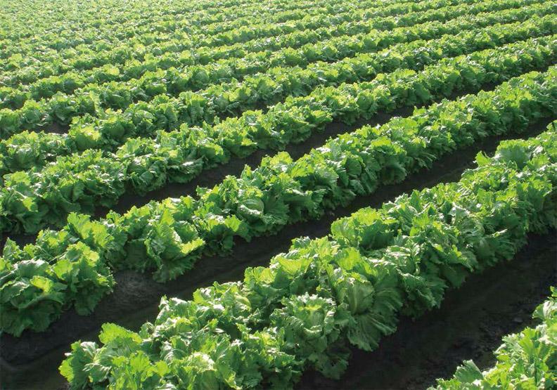 集結小農夫 合成大農制