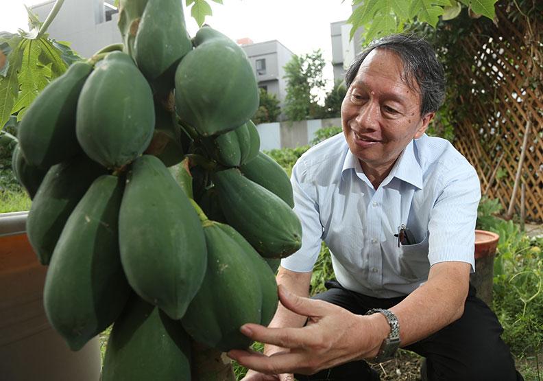 大陸吃了20年基改木瓜,邀葉錫東共享智財權