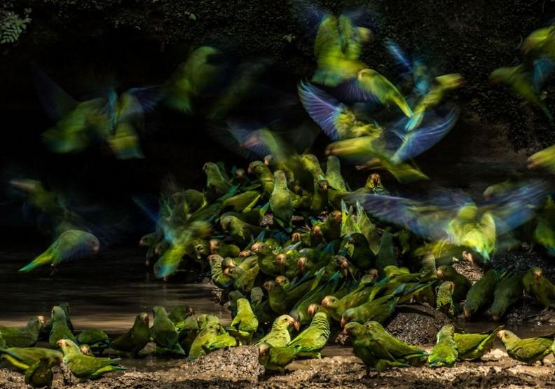 橫掃無數攝影大獎!17歲攝影師記錄大自然的無限感動