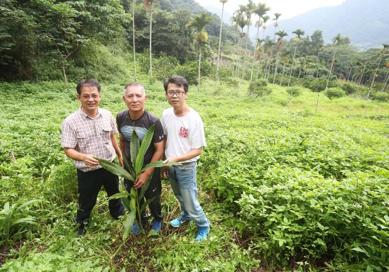 台灣原生保種五年有成 月桃撫育讓部落重燃生機