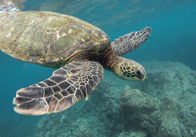 爬過垃圾才能回大海!從資源回收做起救得了海龜嗎?