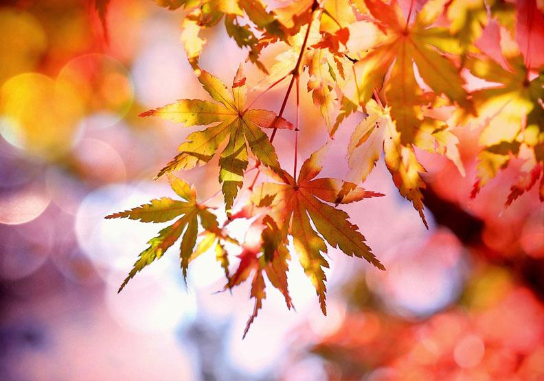 紅葉不輸櫻花!11月京都賞楓的好景點