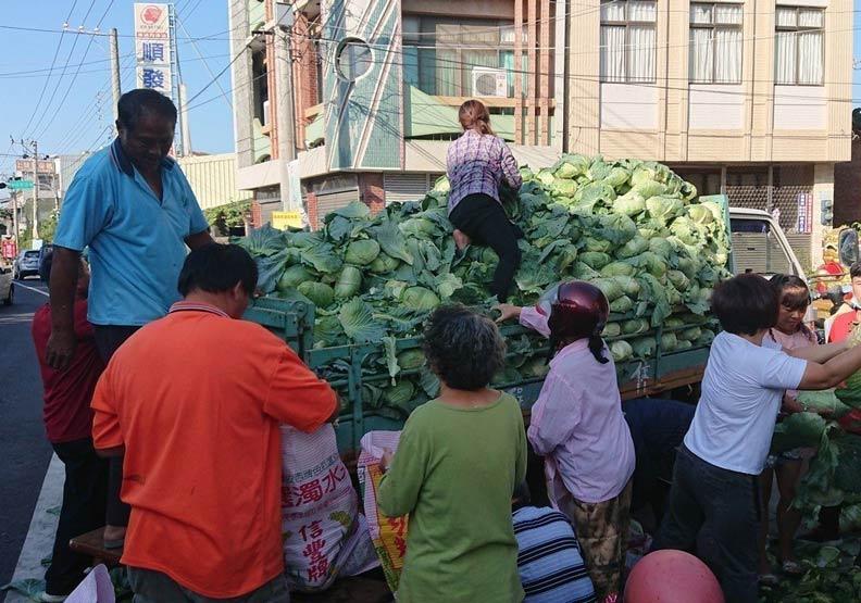 買高麗菜變賄選?里長助農便宜賣 有阿婆買2顆被傳訊
