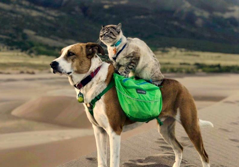 超越藩籬的愛!這對流浪貓狗激盪精彩的冒險旅程