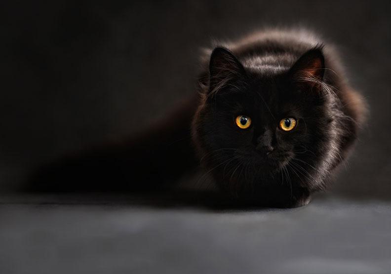 一個虐貓犯被判「勞動服務」到殯儀館的故事