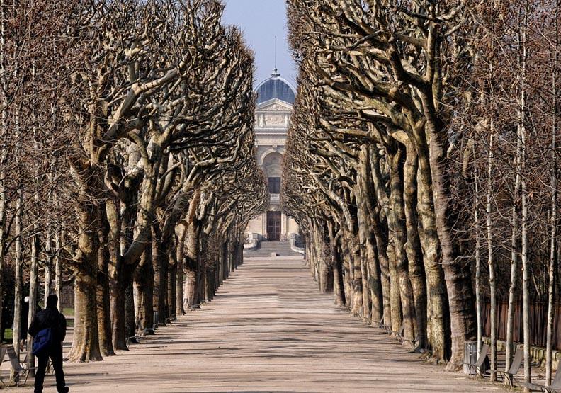 巴黎植物園的巧思!巨型動物燈飾提醒我們一件事…