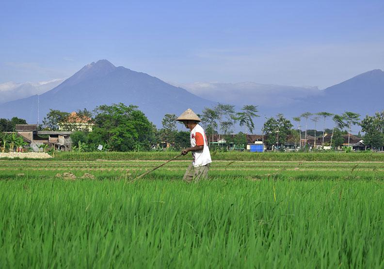 偏離正統的馬克思主義?中國農民的革命翻轉