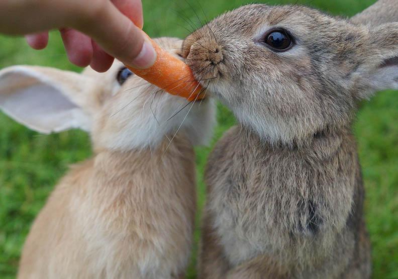 意志力是有限度的?「胡蘿蔔實驗」證實了