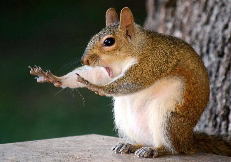 動物也能當諧星!喜劇攝影獎勾勒自然無限笑料
