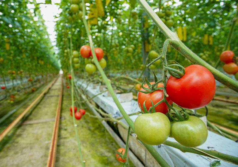 百年品牌可果美多元出擊 從番茄農躍升跨國糧商