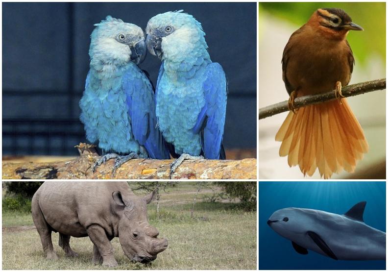 最心痛的事實!科學家證實已於2018年絕種的動物