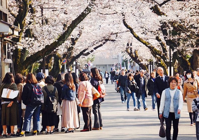 三島由紀夫毀滅性的美感哲學,其實是患了「櫻花熱」?