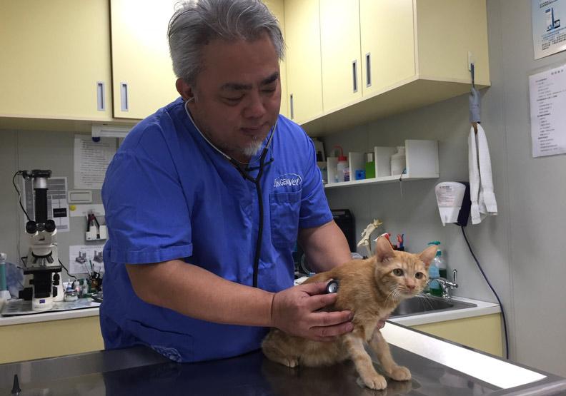 貓博士呼籲:小情侶不要輕易把貓當愛的禮物