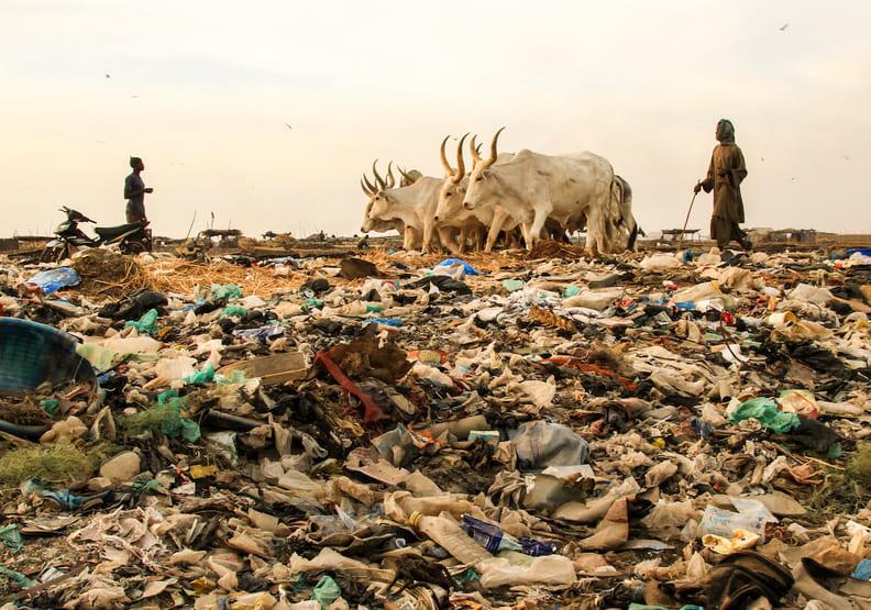 地球最大的悲歌!聯合國報告:人類迫使100萬物種面臨絕種威脅