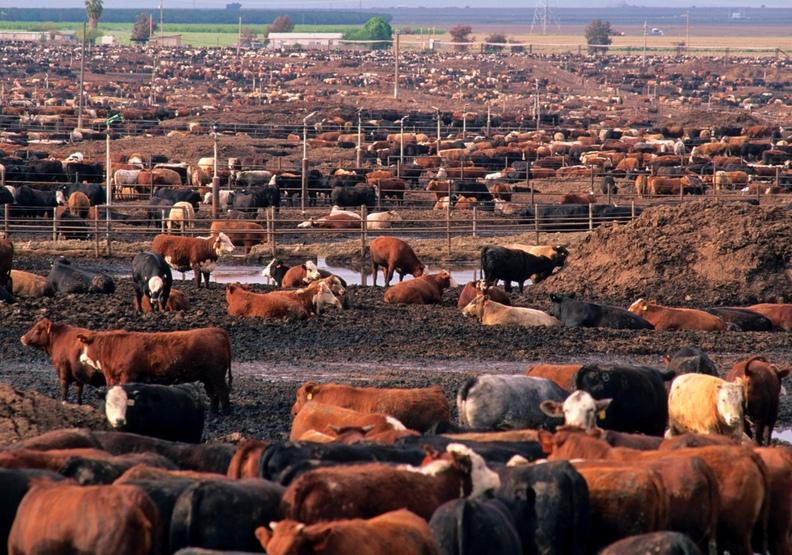 全球暖化的隱形元凶!畜牧業不能說的祕密