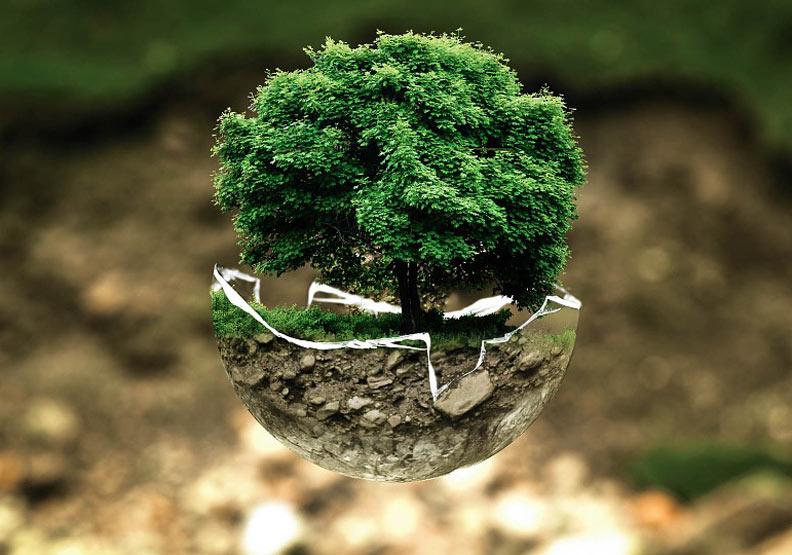 大樹成長理論:五個條件,讓孩子茁壯成長