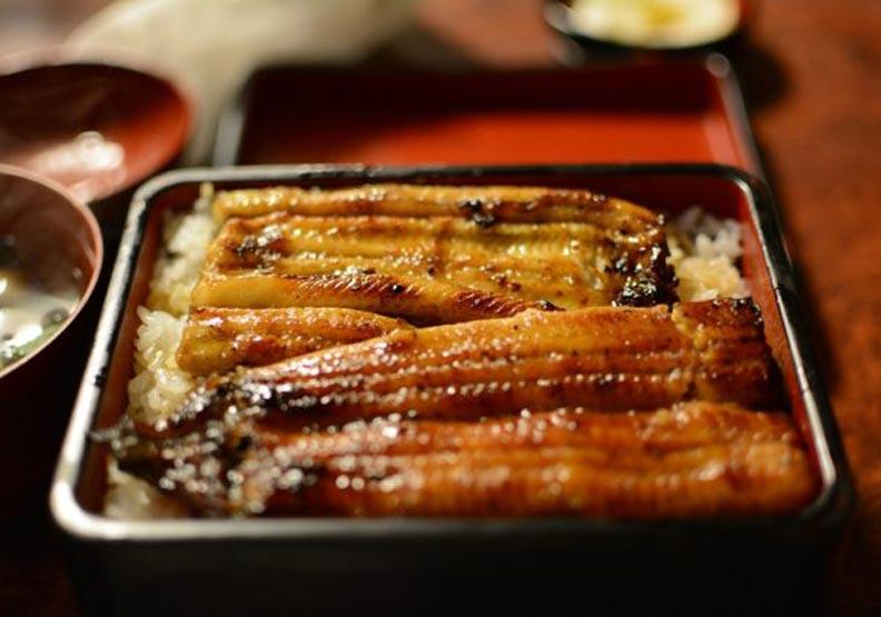 日本研究出「完全養殖」鰻魚,但離量產還有好大一步