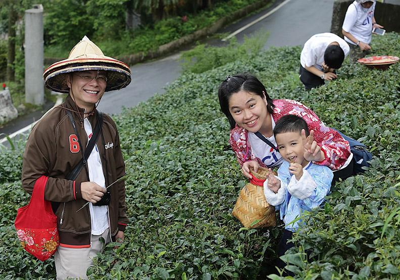 用一壺台灣藍鵲茶,讓環保與茶農經濟雙贏