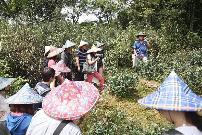 茶農解說茶葉專業知識。