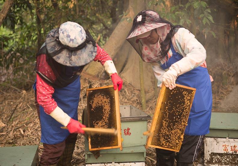 壞運都集中在2019年!養蜂世家:40年來最糟糕的一年