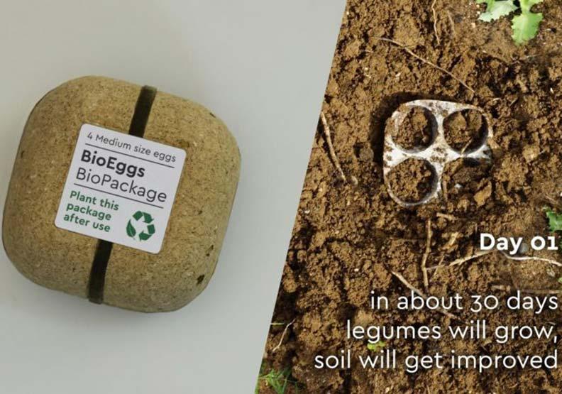 雞蛋盒環保再利用!幫它澆上水,再成為大自然的一份子